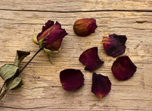 Dry red roses on old wooden Stock Photography