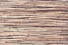 Dry reed background Stock Photos