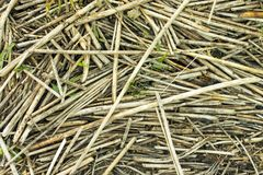 Dry reed lying messy as a background. royalty free stock images