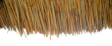 Dry reed Stock Photo