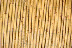 Dry reed straws fence as texture or background Stock Photography