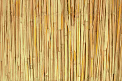 Dry reed texture Royalty Free Stock Photography