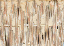 Dry reed wall Stock Photos