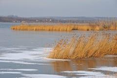 Dry reeds Stock Photo