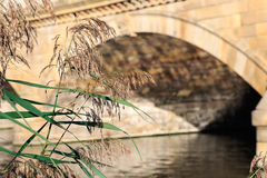 Dry Reeds with Serpentine Bridge in the background Royalty Free Stock Image