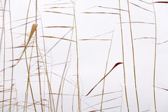 Dry reeds silhouettes pattern Royalty Free Stock Photography