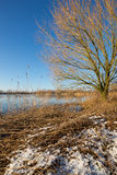 Dry reeds during the winter by lake Rijkerswoerd in Arnhem, Holl Stock Photo