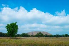 Dry rice field Stock Photo