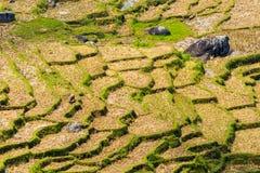 Dry rice paddies pattern stock image