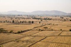 Dry rice paddy field Royalty Free Stock Photos