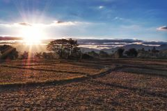 Dry rice paddy in the morning with sunrise royalty free stock photo