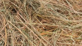 Dry rice straw stock video footage