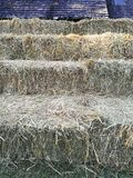 Dry rice straw stand in the garden near a barn. Dry rice straw stand in the garden Royalty Free Stock Photos