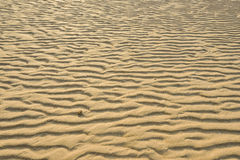 Dry rippled golden sand, ideal for backgrounds. And textures Stock Photos