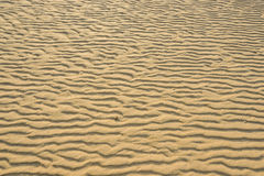Dry rippled golden sand, ideal for backgrounds. And textures Royalty Free Stock Photo