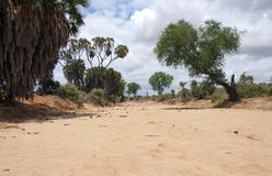 Dry River. A dried out river in Africa Royalty Free Stock Images