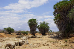 Dry River. A dried out river in Africa Stock Photo
