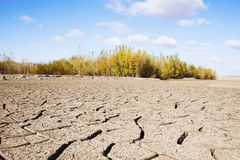 Drought period of rivers, and woods Stock Image