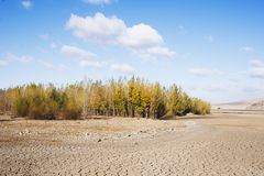 Drought period of rivers, and woods Stock Photos