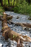 Dry river bed. Alouette Lake,BC, June 2013 Royalty Free Stock Photo