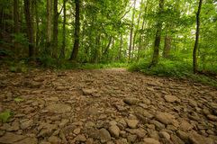 Dry River bed in a forest royalty free stock image