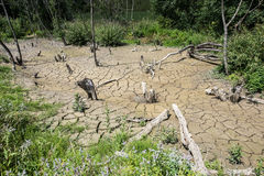 Dry River Bed. Stock Photos