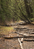Dry River Bed. Dry riverbed in a forest Stock Photo