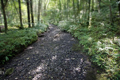 Dry river bed. Running through a forest Royalty Free Stock Photos