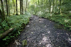 Dry river bed. Running through a forest Stock Photography