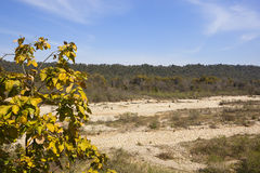 Dry river bed and teak tree. A dry river bed with white pebbles in the kalesar national park in north india with mixed woodland trees and a teak tree in the Stock Photo