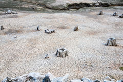 Dry River Bed with Tree Stumps Royalty Free Stock Images