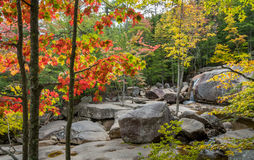 Dry River Bed. In the White Mountains of New Hampshire Royalty Free Stock Images