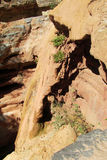 Dry river canyon Royalty Free Stock Photos
