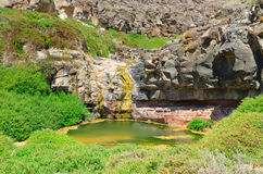 Dry river oasis. Desert oasis in dry river bed in Los Molinos valley, Fuerteventura Royalty Free Stock Photography