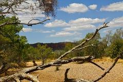 Dry river valley, Australia Royalty Free Stock Photos