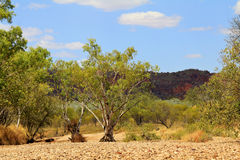 Dry river valley, Australia Royalty Free Stock Photography