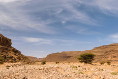 Dry river Wadi Draa near Zagora, Morocco. Landscape of the dry river Wadi Draa near Zagora in Morocco with a tree in the the river bed and blue sky with some stock image