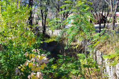 A Dry Riverbed. Along the fence with trees of green and gold leaves Royalty Free Stock Photo