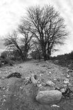 Dry riverbed bw Stock Photo