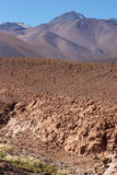 Dry riverbed with cacti, Atacama Desert, Chile Stock Photography