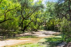 A dry riverbed in the mountains. In summar stock photos