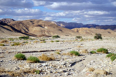 Dry riverbed Royalty Free Stock Images