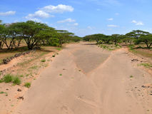 Dry riverbed. Not far away forest. Africa, Kenya. Stock Photography