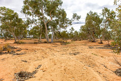 Dry riverbed in outback South Australia. Stock Images