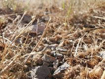 Dry rocky ground with ant. Rocky ground covered with dry grass and an ant carrying seed stock photo