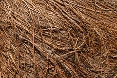 Dry roots are fuzzy, brown dry roots. Abstract background. Stock Image