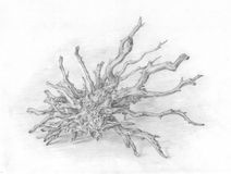 Dry roots pencil drawing Royalty Free Stock Photo