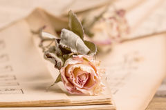 Dry rose Stock Photography