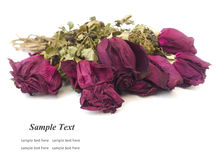 Dry rose. Dried roses isolated on white background Royalty Free Stock Photos