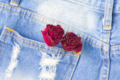 Dry rose in back pocket jean with copyspace background. Royalty Free Stock Image